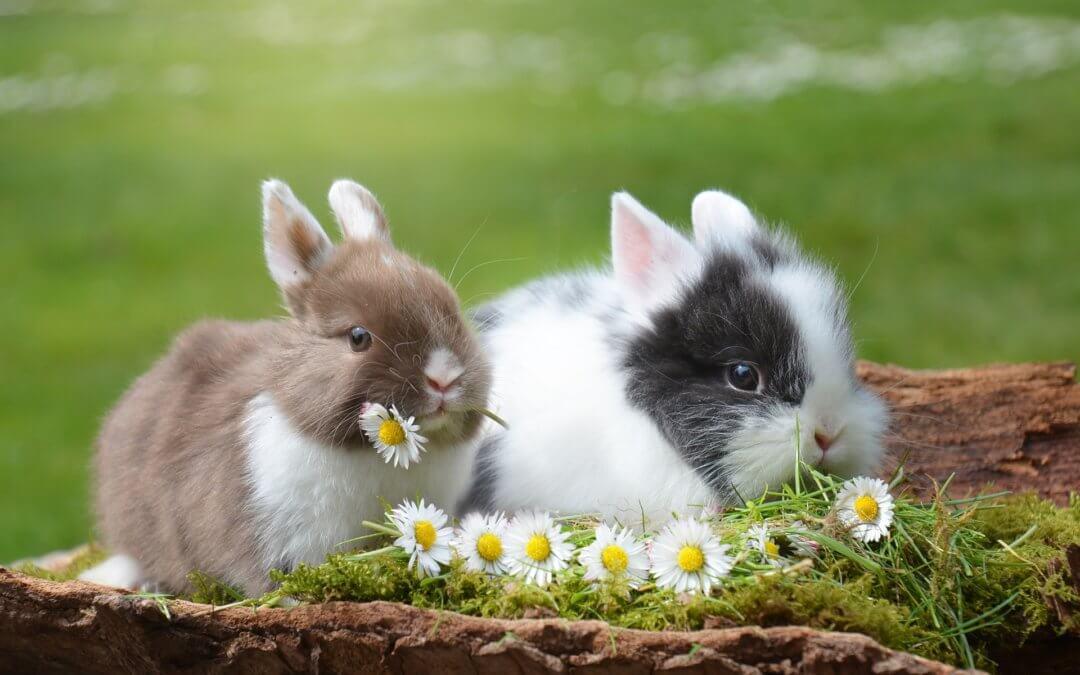 Ostern & der Frühling – bald ist es wieder soweit
